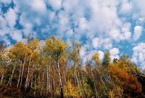 阿里河国家森林公园